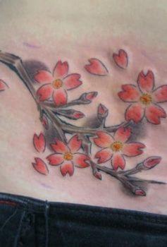 カラー 桜 さくら