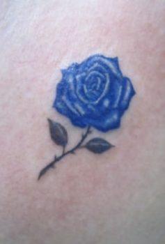 スモールサイズ 青薔薇