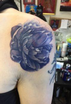 カラー 花 flower