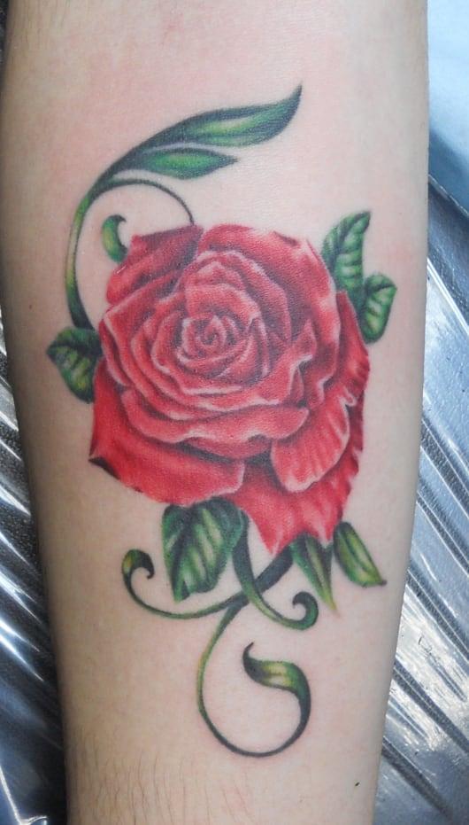 カラー バラ rose